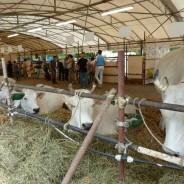 Grande successo per la 35esima Fiera Agricola Mugellana