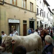 """Sabato tante iniziative anche nel centro storico con il CCN """"Nel Borgo"""""""